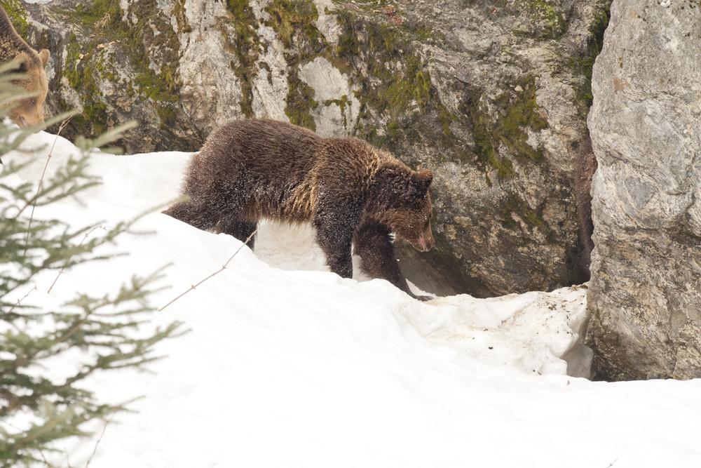 Ратраки в стране медведей гризли: пример семейного бизнеса из Монтаны